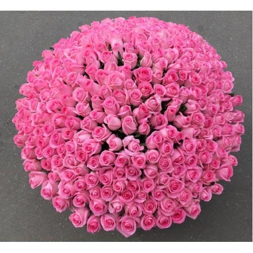 Купить на заказ 501  роза с доставкой в Шу