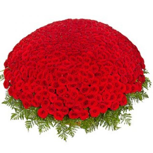 Купить на заказ 301  роза с доставкой в Шу